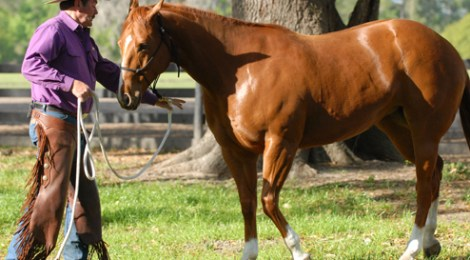 Five Ground Exercises to Try with Your Horse - Horse Magazine