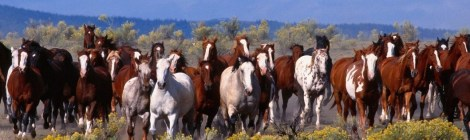 Living Legends of the West: The Story  of America's Wild Horses and Burros - Documentary