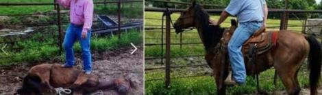 Ban horses from being horsey