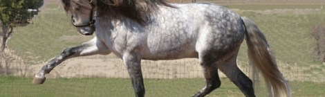 Finesse and power: The Andalusian horse