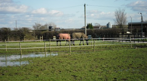Equine Therapy at Scorpton