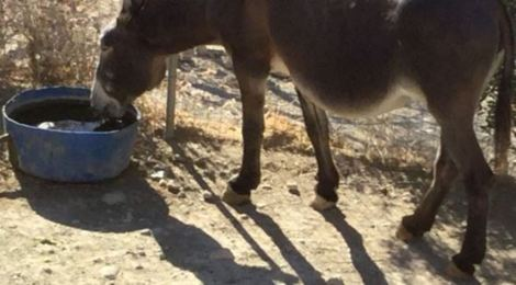 Water crisis appeal for an equine sanctuary