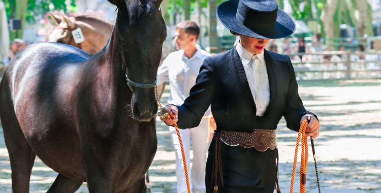 Guest Post: Preparing Your Horse for Shows