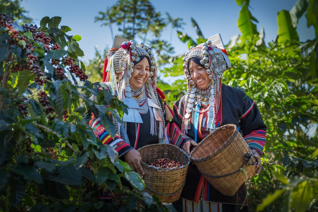 Ethical coffee brands work to build relationships with farmers.
