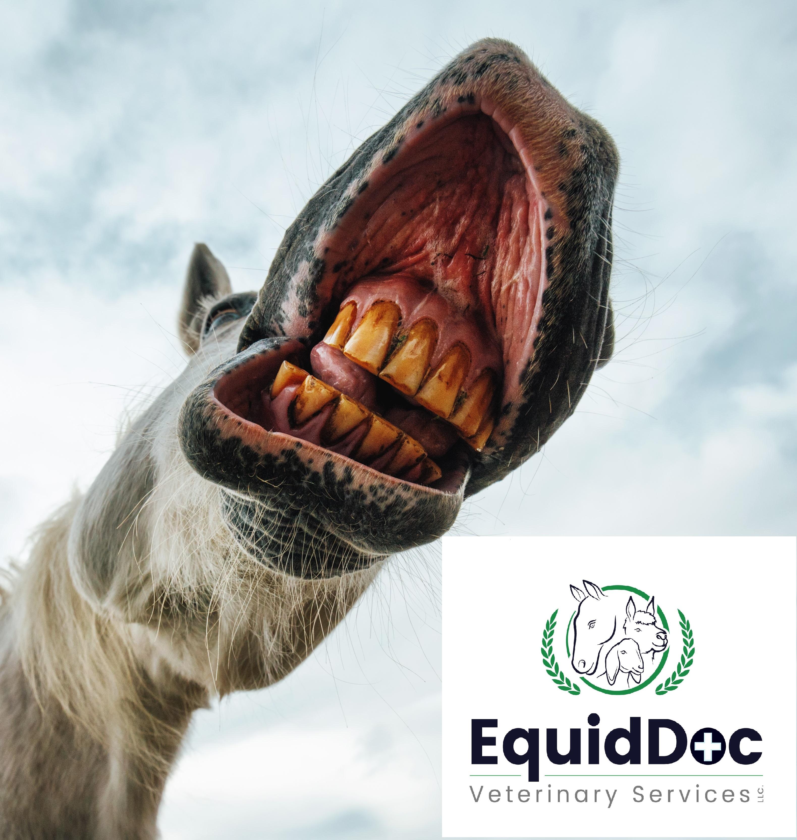 Equine Dental Series Part 1