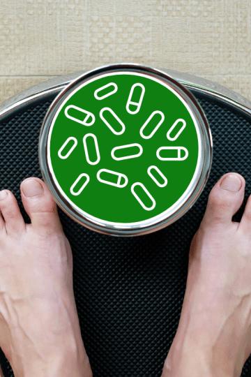 Le rôle fondamental des probiotiques dans la gestion du poids