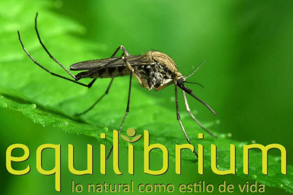 malaria y mosquitos