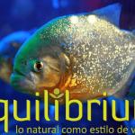 piraña o pez caribe