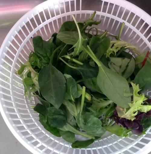 centrifuga de vegetales