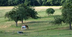 Normandie – Région Caen-falaise – exploitation agricole