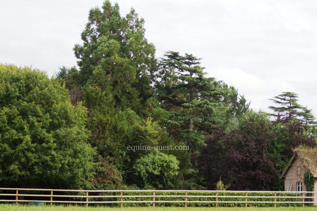 Normandie – Pays d'Auge – Haras d'élevage/écuries