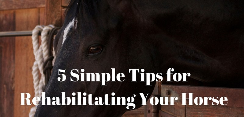 5 Tips for Rehabilitating Your Horse