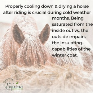 winter horse riding cool down
