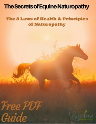 Equine Health through Naturopathy