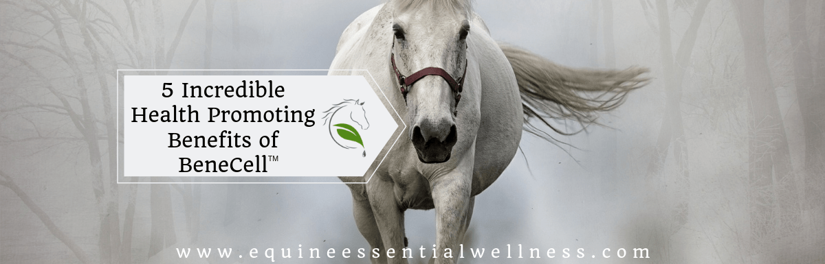 Equine Nutritional Benefits of BeneCell™