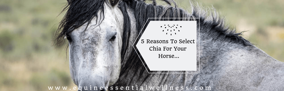 5 Reasons to Choose Chia Seed as a Horse Supplement