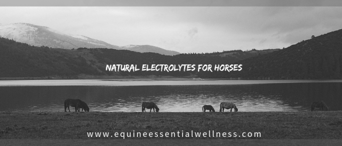 Natural Electrolytes for Horses