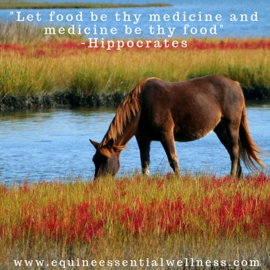 Horse Supplement as Medicine
