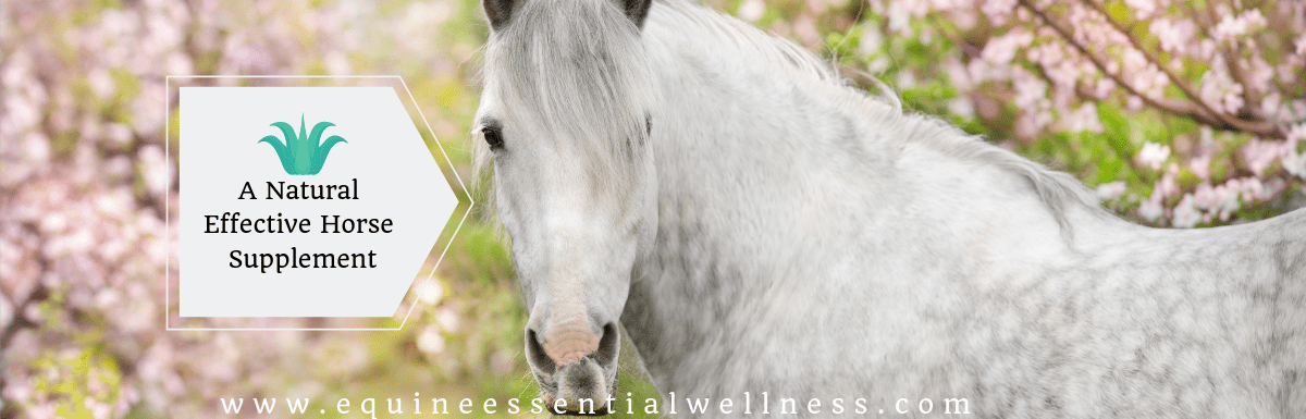 Aloe Vera- A Natural Effective Horse Supplement