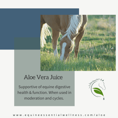 Benefits of giving your horse aloe
