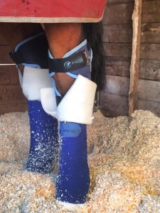 Mallie -wearing his Magnetic Hock Boots