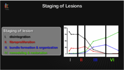 Staging of Lesions