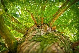 Mise au vert : L'avenir de la forêt (Théo Mertens)