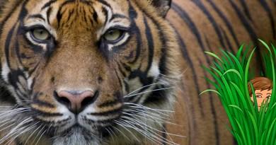 Leyenda vietamita: Las rayas del tigre