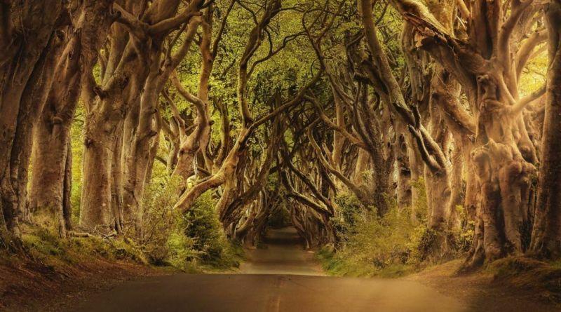 Leyendas de Irlanda: Seres y criaturas mágicas