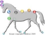 a_Horse_Chakras_Pic1