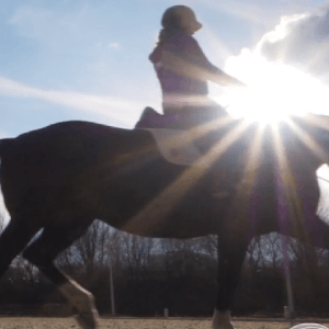 Compassionate Training for Today's Sport Horse - Topic 1