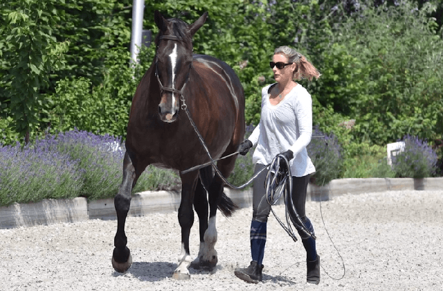 Compassionate Training for Today's Sport Horse - Topic 3