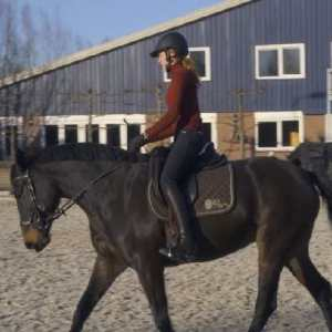 Compassionate Training for Today's Sport Horse - Topic 5