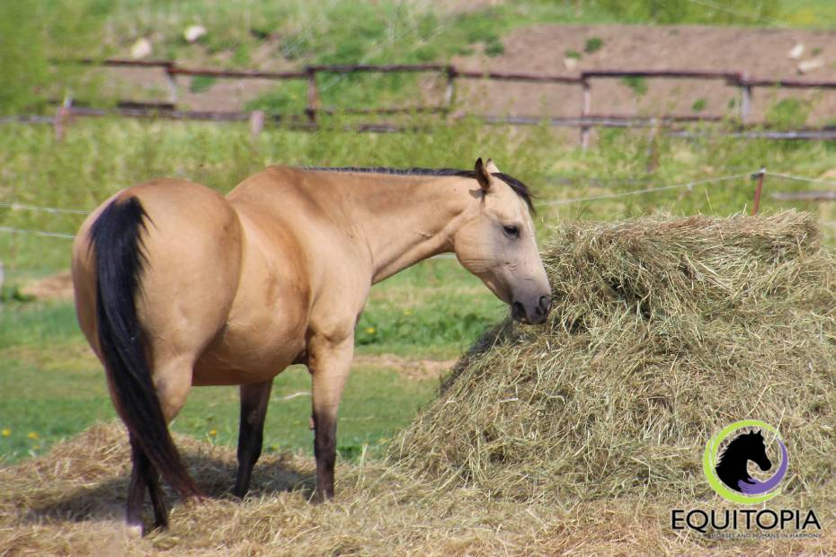 The role of nutrition in developing your horse's topline