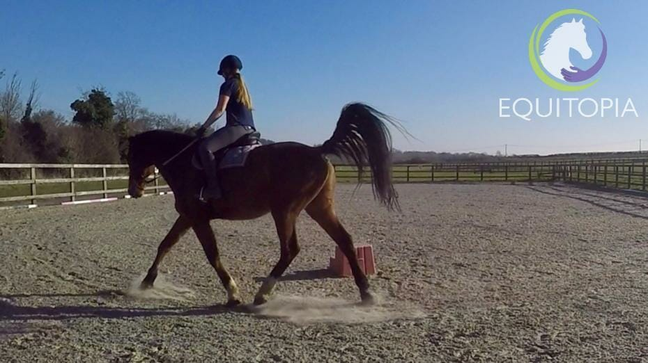 Rider position in vertical balance Equitopia
