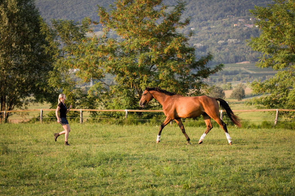 Stress and learning for horses