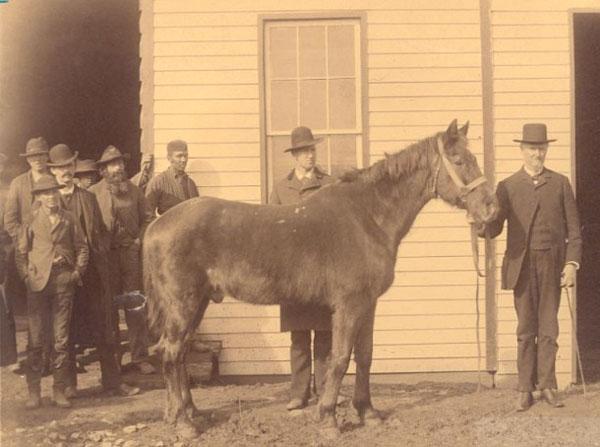 Little Sorrel Stonewall Jackson Civil War