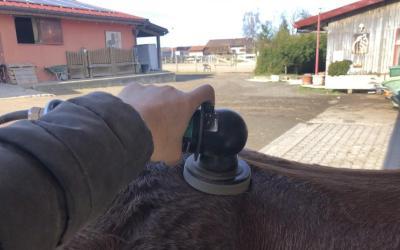 Marc Moureaux [Masseur Equin]