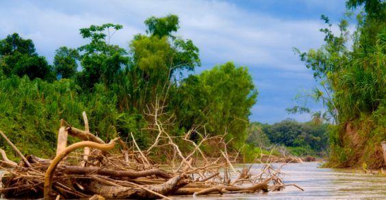Minacciare la biodiversità senza vergogna