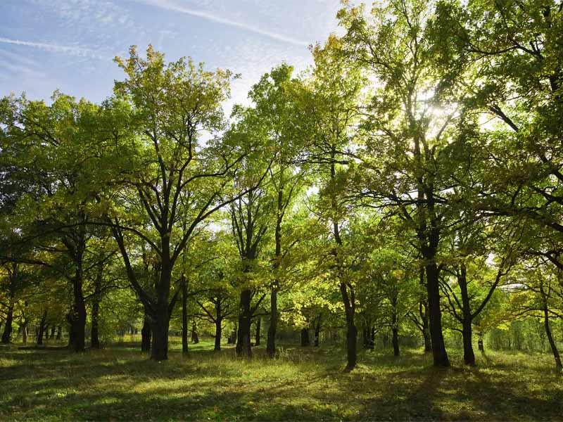 Baskegur Eguna reivindica que los bosques y la madera son indispensables para impulsar un modelo sostenible económico, social y medioambiental
