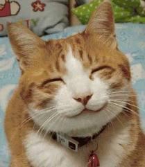 kucing