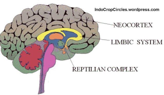 neocortex-brains