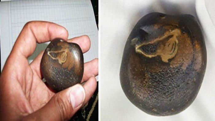 Batu yang Diklaim Sebagai Batu Ababil