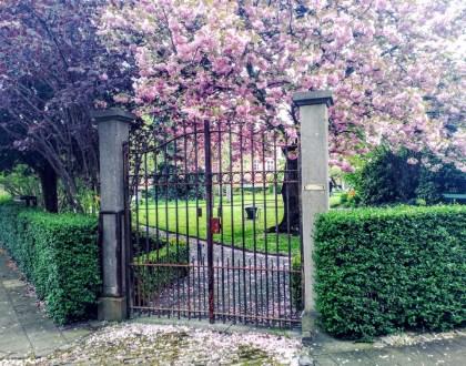 Begijnhof, un jardín de paz