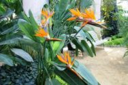 "celebra la llegada de la primavera en ""les serres royales de laeken"" - Flores naranjas 300x200 - Celebra la llegada de la primavera en ""les Serres Royales de Laeken"""