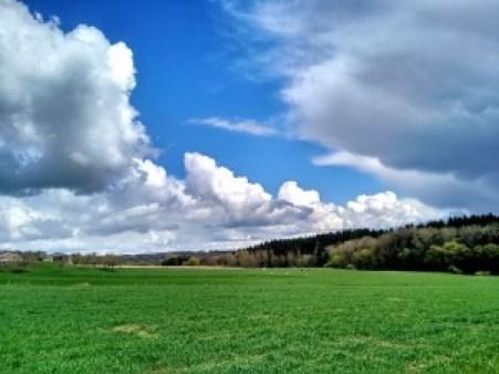 Hallerbos (2) Hallerbos, el bosque azul de Flandes - Hallerbos 2 1 300x225 - Hallerbos, el bosque azul de Flandes