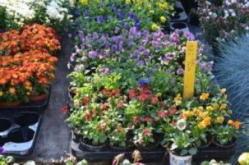 n70_3170_opt Gante, la ciudad de las flores - N70 3170 opt 300x199 - Gante, la ciudad de las flores