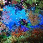 …la fábula de la ostra y el pez