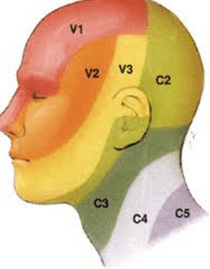 dermatomes-of-the-neck