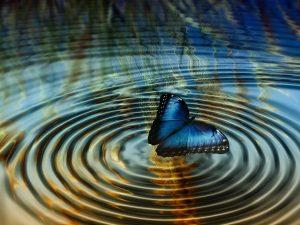 papillon eau
